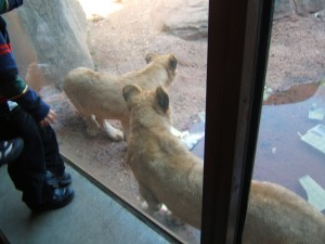 Yeah, that's how close we were to LION CUBS!